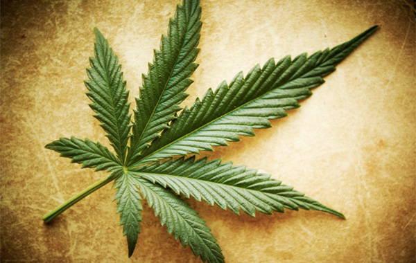 estudios-marihuana-cancer